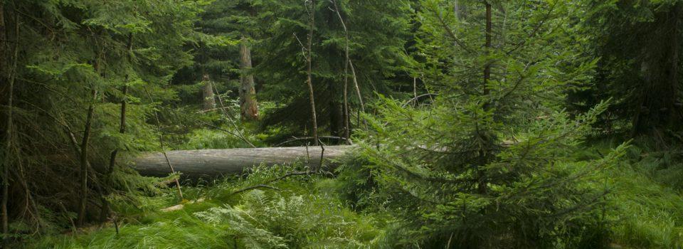 Bayerischer Wald Nationalparkfilm