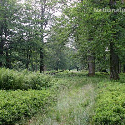 Nationalpark Bayerischer Wald - Auf dem Albrechtschachten