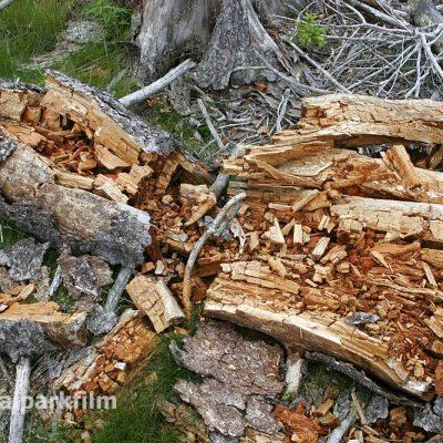 Totholz ist ein wichtiger Lebensraum im Wald