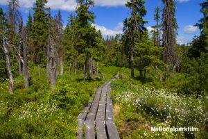 Filmaufnahmen auf den Schachten und im Filz - Nationalpark Bayerischer Wald