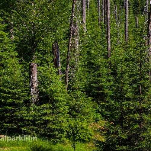 Neuer Wald am Sagwasser