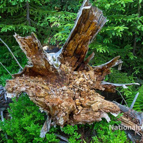 Totholz als Lebensraum ist extrem wichtig
