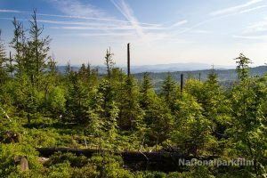 Wilder neuer Wald zwischen Lusen und Tummelplatz